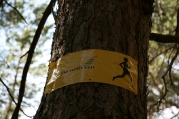 Informatīvā sanāksme par dabas aizsardzības plana uzsākšanu Carnikavā_4