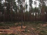 22.11.2019. Pirmie meža atjaunošanas darbi dabas parkā