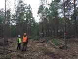 Turpinās mežaino kāpu biotopu atjaunošanas un apsaimniekošanas darbi