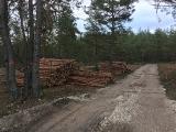 Turpinās mežaino kāpu biotopu atjaunošanas un apsaimniekošanas darbi_2