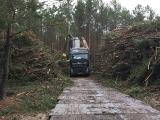Turpinās mežaino kāpu biotopu atjaunošanas un apsaimniekošanas darbi_3