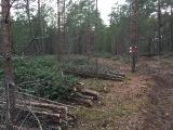 Turpinās mežaino kāpu biotopu atjaunošanas un apsaimniekošanas darbi_4